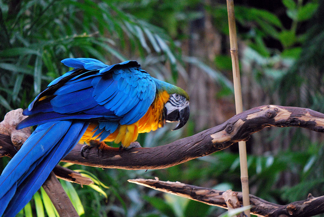 McCaw Parrot at the Vancouver Bloedel Floral Conservatory by Karen Neoh.