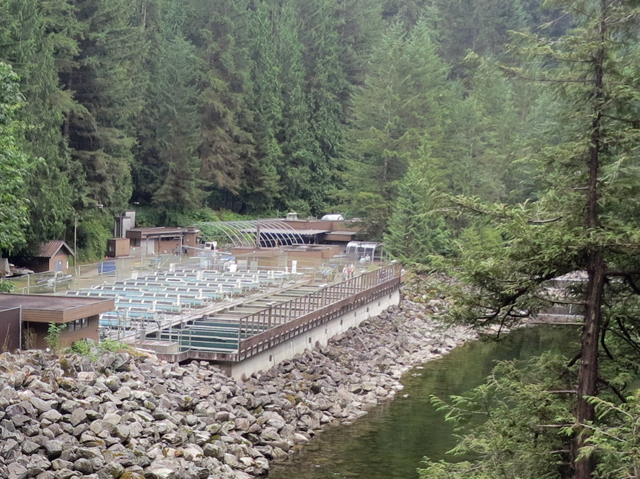 Capilano River and Salmon Hatchery in Vancouver. Photo by Ruth Hartnup.